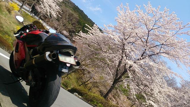 富士霊園2014_4