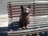 JR湯本駅 猫