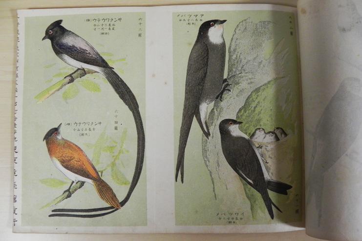 保護鳥写真図