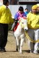 140315川崎競馬RUN-19-乗馬体験コーナー