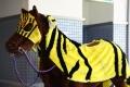 川崎競馬誘導馬衣装展示会-01