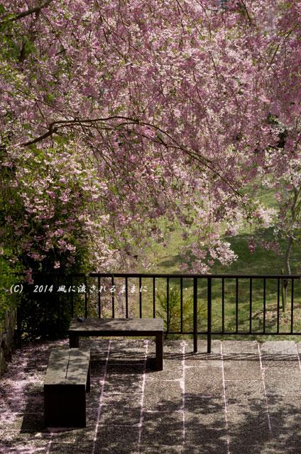 2014年 大阪・勝尾寺の桜3