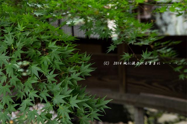 2014年8月 京都・島原 角屋(すみや)7