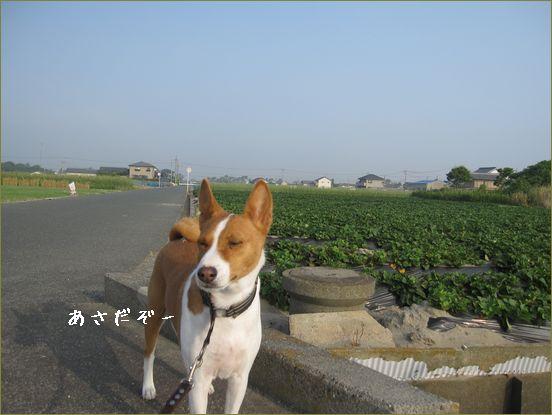 久しぶりの散歩写真