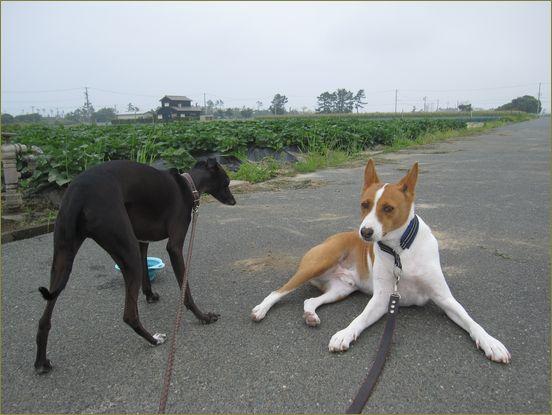 てこでも動かない犬