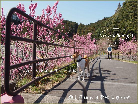 桜もちらほら咲いていました。