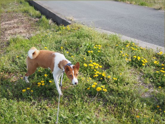 散歩も行ってるよ。