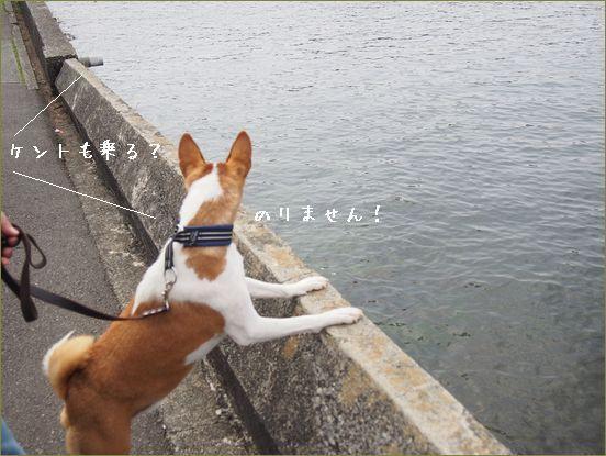 水が大嫌いな犬