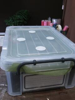 ヘラクレス♀の容器