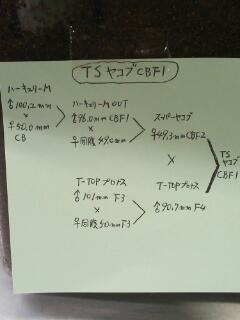 TSヤコブ血統構成