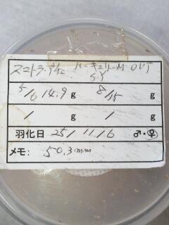 TSヤコブ今回チョイス♀50.3ミリ
