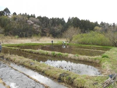 2014_0405_nawashiro_0023_R.jpg