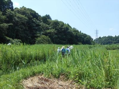 2014_0803_yatsuda_0017_R.jpg