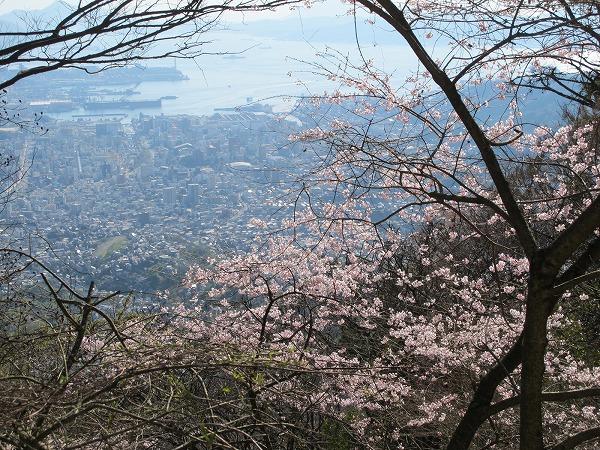 灰ヶ峰の桜2-8