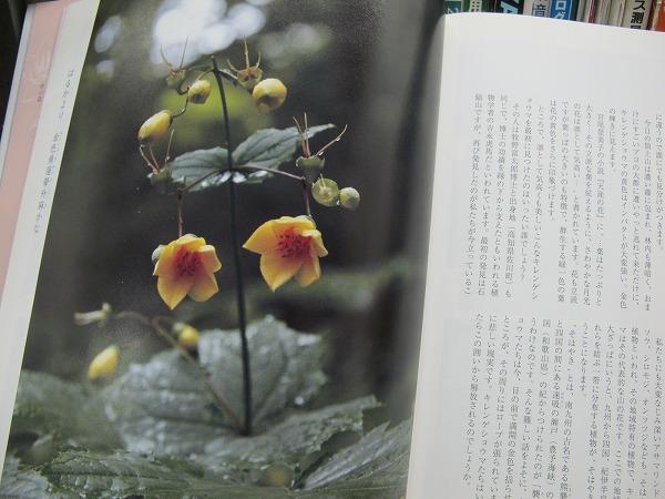 四国の花3