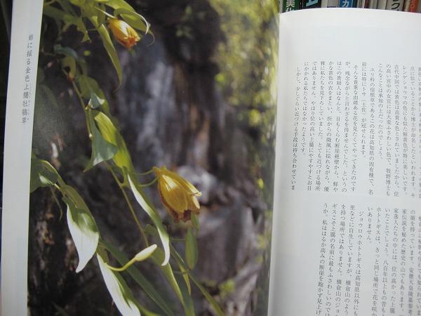 四国の花4