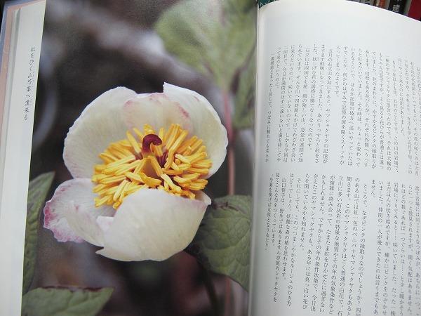 四国の花5