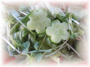 518 生野菜 ブログ