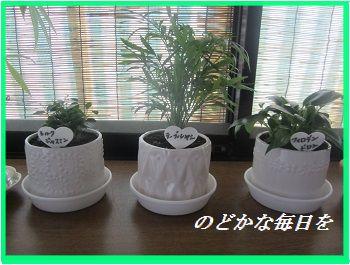 612 観葉植物 ブログ