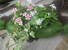 613 花を植えました2 ブログ