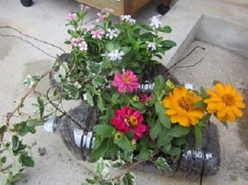 613花を植えました2種類 ブログ