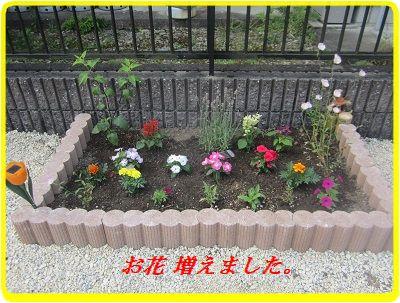 621お花植えました ブログ