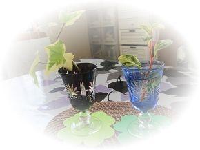 714観葉植物 ブログ