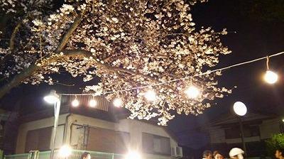 140329hanamimeijiro.jpg