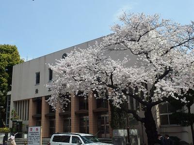 14401sakura.jpg