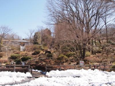 八王子はまだ雪が残っていました。