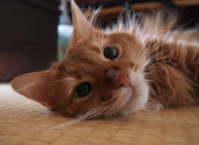 畳の上のころりんきらら。