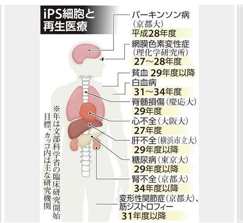 IPSと再生医療