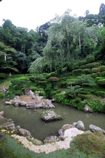 医光寺庭園の糸桜(9月)