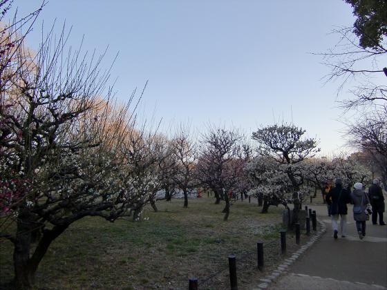 大坂城公園梅林2014-04