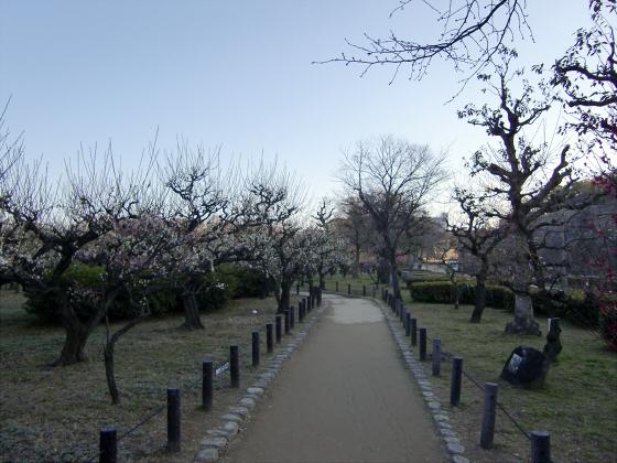 大坂城公園梅林2014-06