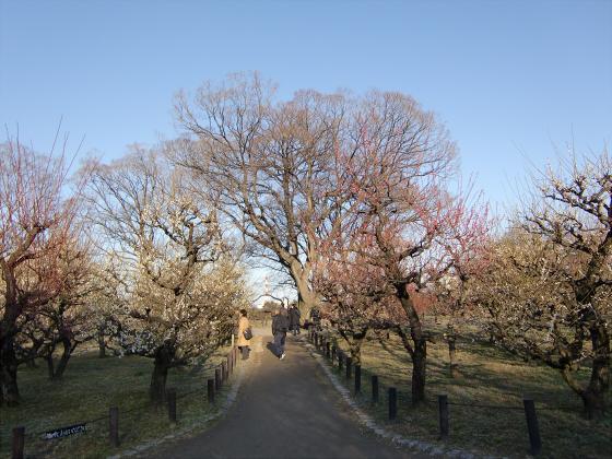 大坂城公園梅林2014-08