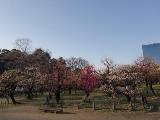 大坂城公園梅林2014-12
