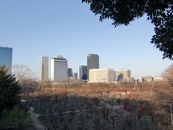大坂城公園梅林2014-13