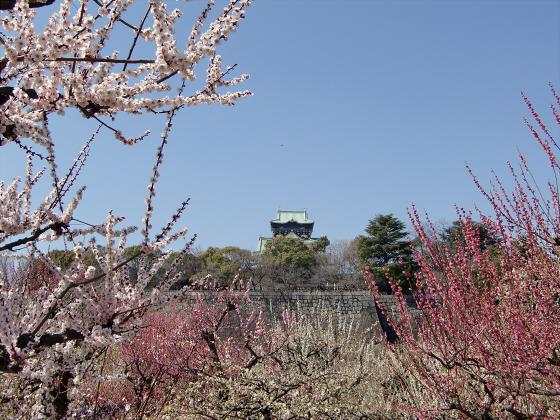 大阪城公園梅林20131-01