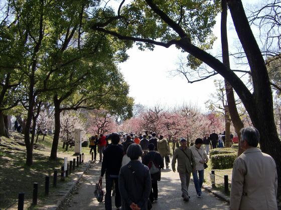 大阪城公園梅林20132-04