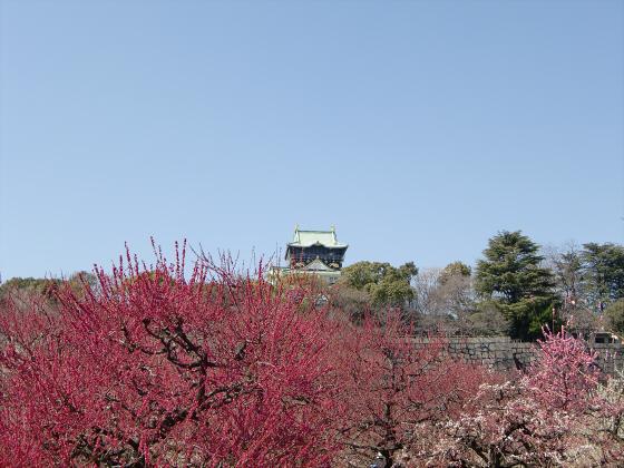 大阪城公園梅林20131-05