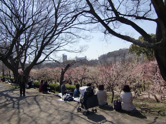 大阪城公園梅林20132-05