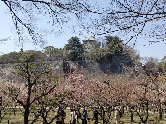 大阪城公園梅林20132-06