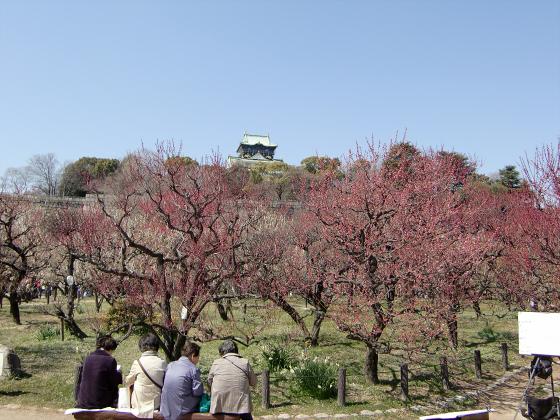 大阪城公園梅林20131-08
