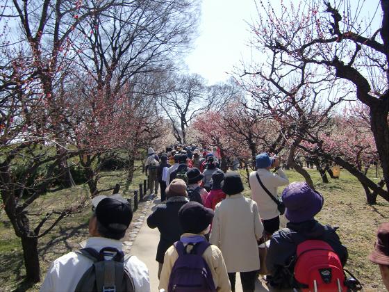 大阪城公園梅林20131-11