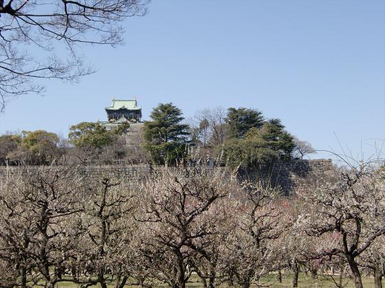大阪城公園梅林20131-17