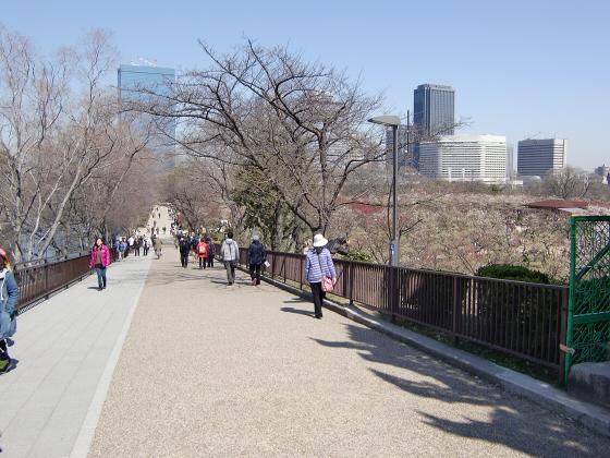 大阪城公園梅林20132-11