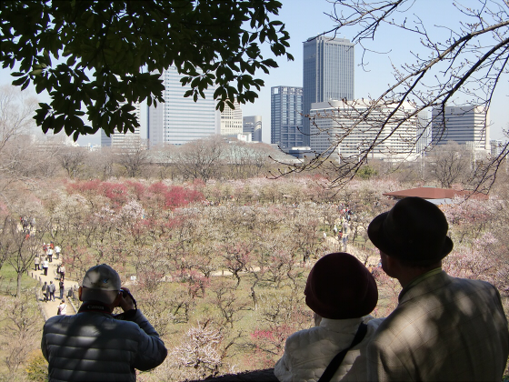 大阪城公園梅林20132-12