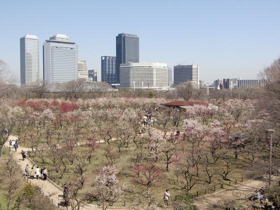 大阪城公園梅林20132-13