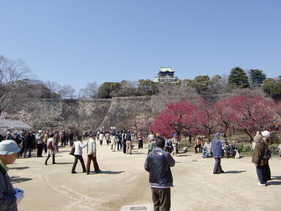 大阪城公園梅林20132-19